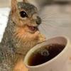 Coffeechipmunk